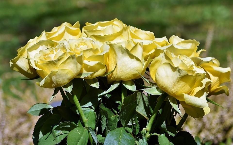 Kwiaty to najpiękniejsze ozdoby i dodatki